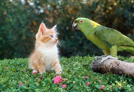 Amazon Parrot Facts - avianandexotic.com