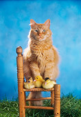 CAT 09 RC0016 01