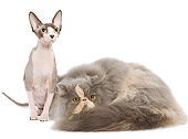 CAT 10 JE0001 01