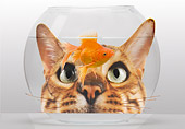 CAT 10 JE0003 01