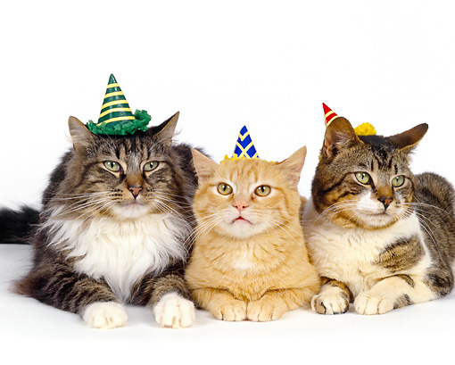 Kittens Wearing Party Hats Wearing Party Hats Facing