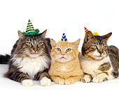 CAT 10 RK0003 04