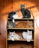 CAT 10 RK0007 01
