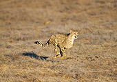 CHE 01 GL0001 01