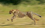 CHE 01 JE0001 01