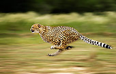 CHE 01 JE0005 01
