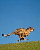 CHE 01 RK0005 04