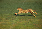 CHE 01 RK0010 04