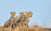CHE 02 KH0018 01