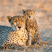 CHE 02 KH0019 01
