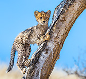 CHE 02 KH0023 01
