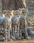 CHE 02 KH0025 01