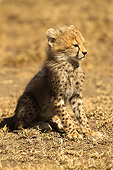 CHE 02 MC0001 01