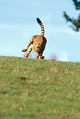 CHE 02 RK0001 07