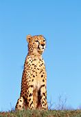 CHE 02 RK0013 07