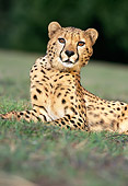 CHE 02 RK0038 03