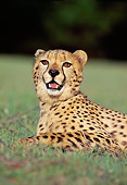 CHE 02 RK0050 12