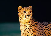 CHE 02 RK0059 01