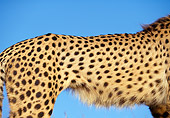 CHE 02 RK0068 01