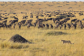CHE 02 WF0002 01