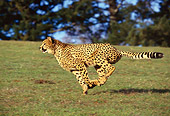 CHE 02 RK0011 02