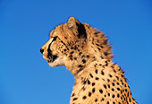 CHE 02 RK0028 05