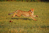 CHE 02 RK0106 12