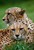 CHE 02 RK0128 01