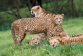 CHE 02 RK0138 01