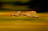 CHE 02 RK0263 01