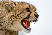 CHE 03 JZ0001 01