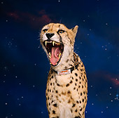 CHE 03 RK0008 05