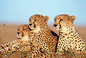 CHE 04 GL0001 01
