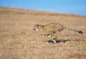 CHE 04 GL0004 01