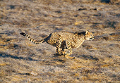 CHE 04 GL0005 01