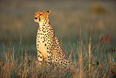 CHE 04 JZ0005 01