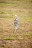 CHE 04 MC0005 01