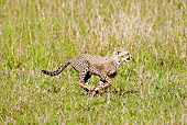 CHE 04 MC0006 01