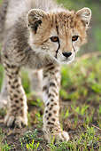 CHE 04 MC0008 01