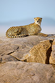 CHE 04 MC0009 01