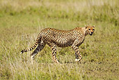 CHE 04 MC0011 01