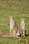 CHE 04 MC0015 01