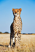 CHE 04 MH0001 01