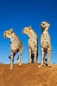 CHE 04 MH0005 01