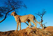 CHE 04 MH0007 01