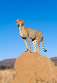 CHE 04 MH0008 01