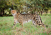 CHE 04 MH0009 01