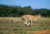 CHE 04 MH0013 01