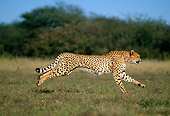 CHE 04 MH0014 01