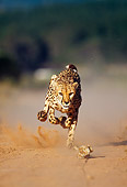 CHE 04 MH0017 01